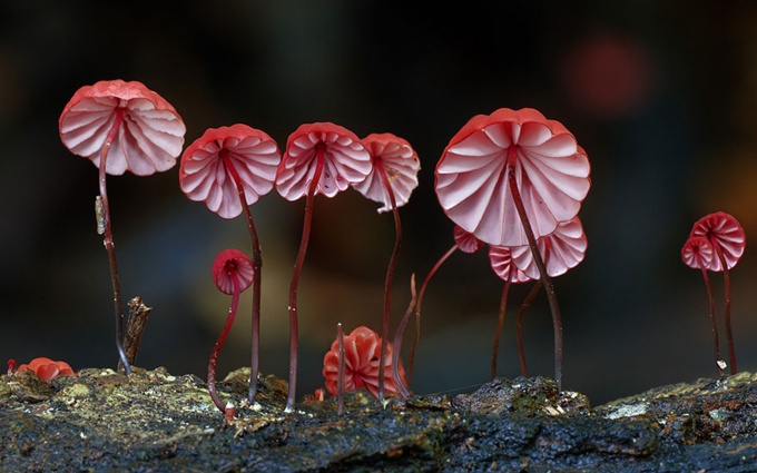 A Closer Look At The Magical World Of Mushrooms (31 pics)
