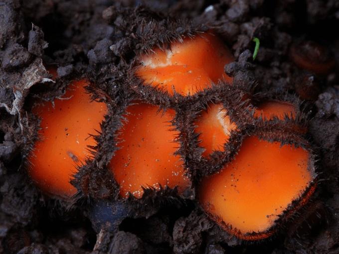 A Closer Look At The Magical World Of Mushrooms (31 pics)