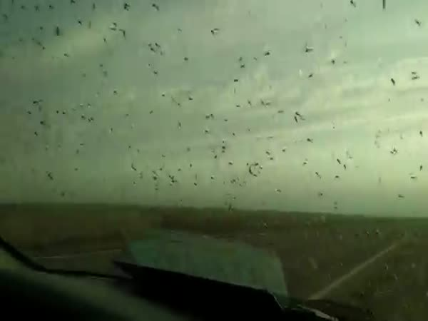 Millions Of Mosquitoes Surround A Car