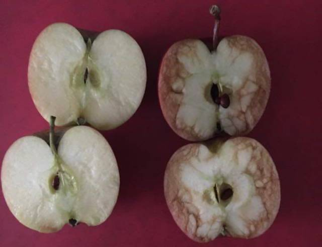 Teacher Uses Apples To Explain What Bullying Is (5 pics)
