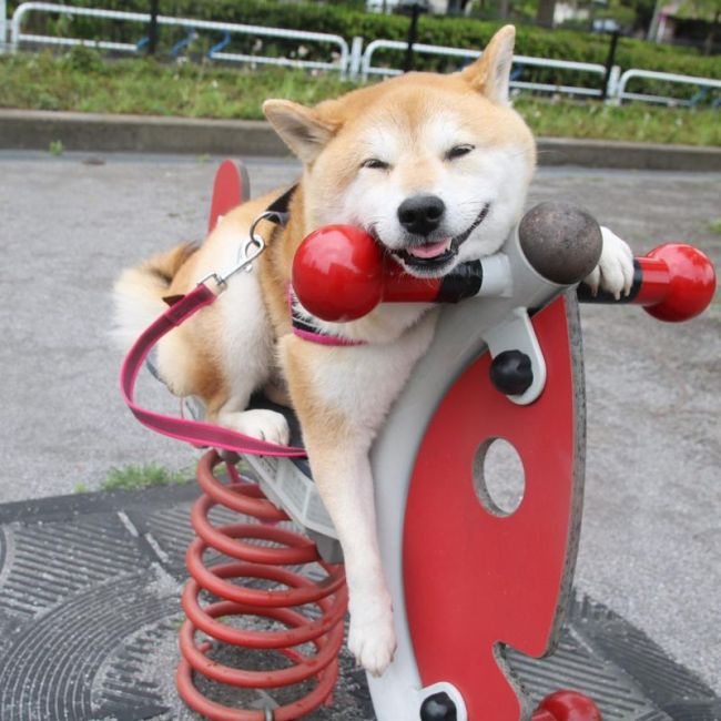 Funny Dog Loves To Play At The Park (17 pics)