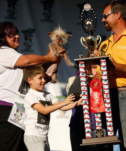 Sweepee Rambo Named World's Ugliest Dog (5 pics)
