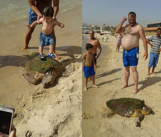 Turtle Gets Dragged From The Sea So People Can Take Selfies (4 pics)