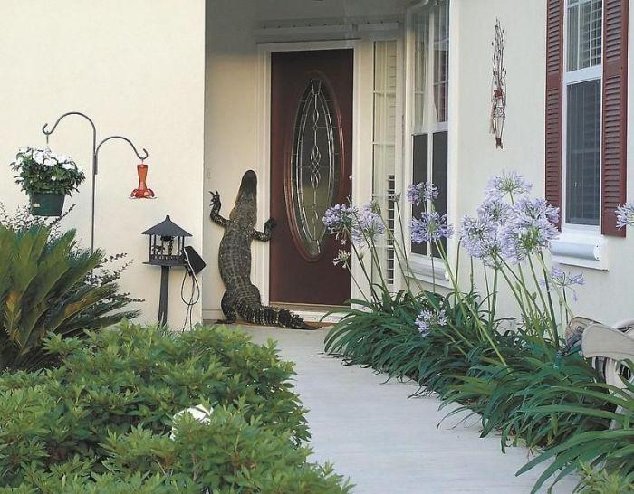 Alligators Are Everywhere In Florida (16 pics)