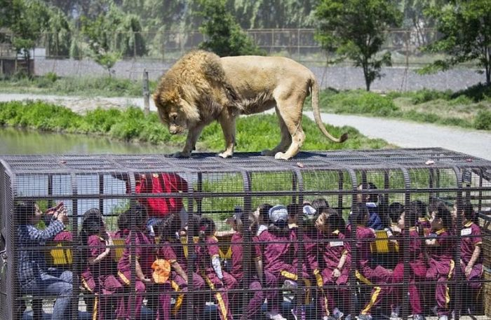 Unique Chinese Zoo Puts Nature Right In Front Of You (10 pics)