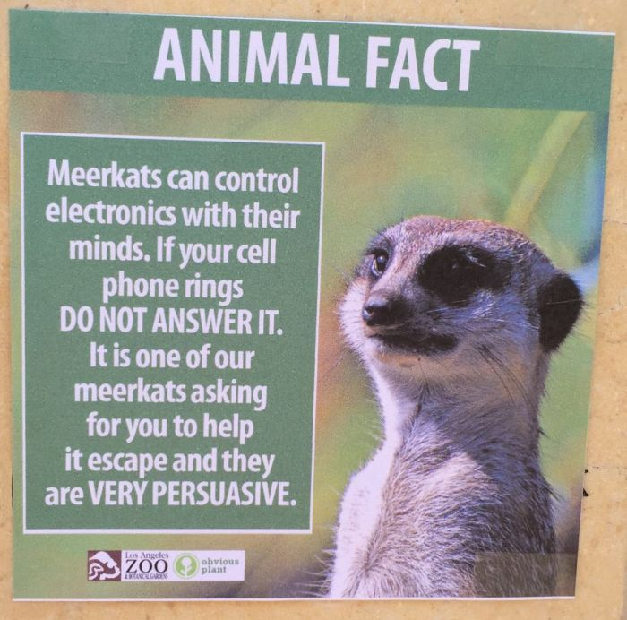 Fake Animal Facts That Were Found At The Los Angeles Zoo (9 pics)