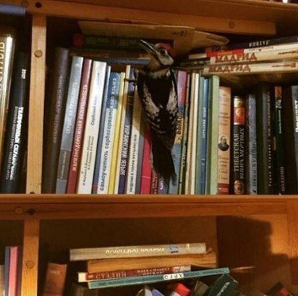 Woodpecker Gets Nursed Back To Health (12 pics)