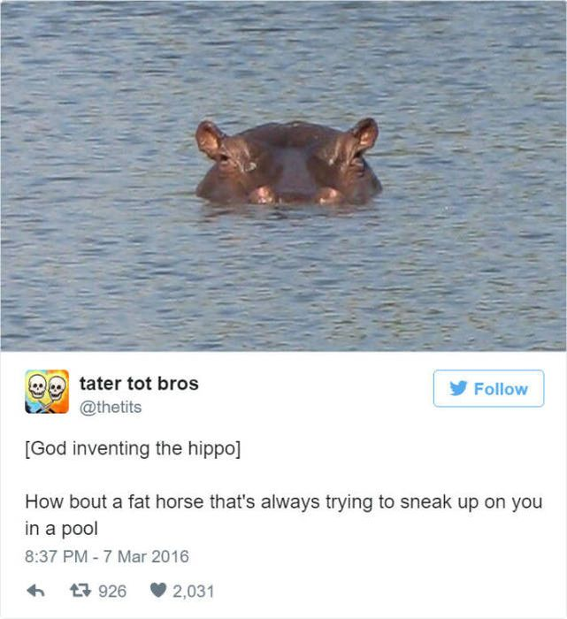 Twitter Reveals How God Created Animals (50 pics)