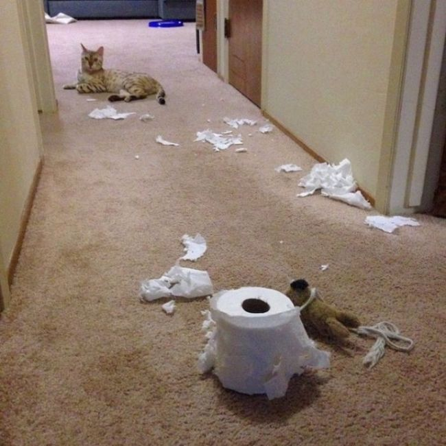 Adorable Animals Trying To Act Innocent When They're Clearly Guilty (19 pics)