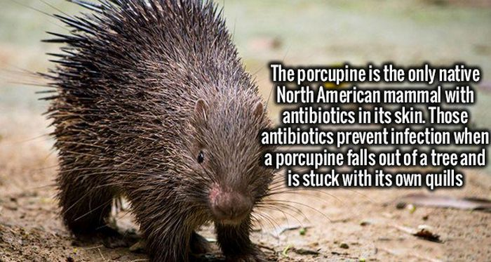 Fascinating Facts That Will Make You Smarter In Just A Few Minutes (18 pics)