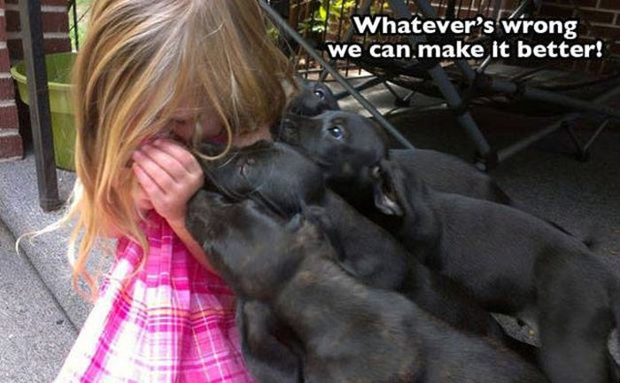 Pictures That Sum Up What It's Like To Love A Dog (25 pics)