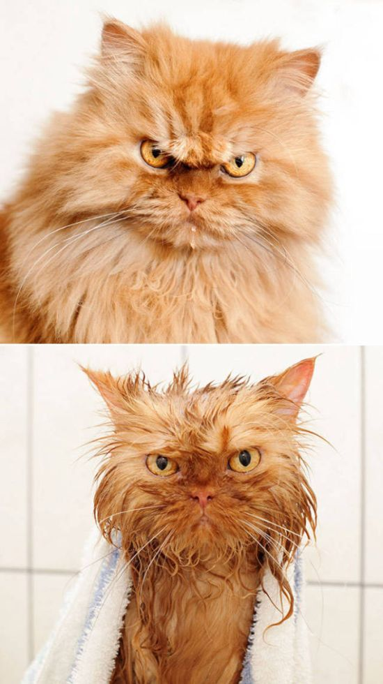Ridiculous Before And After Pictures Of Animals Taking A Bath (14 pics)