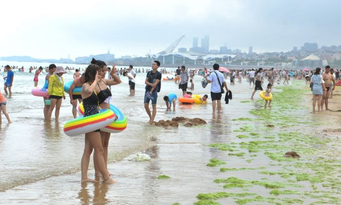 Beachgoers In China Are Bathing In Algae (19 pics)