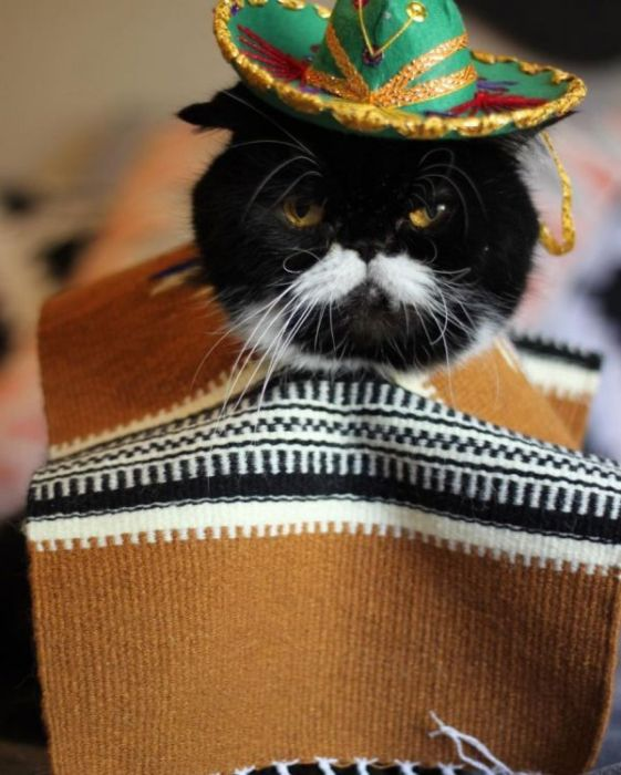 Kyle Is A Cat With A Cute Mustache And A Troubled Past (10 pics)