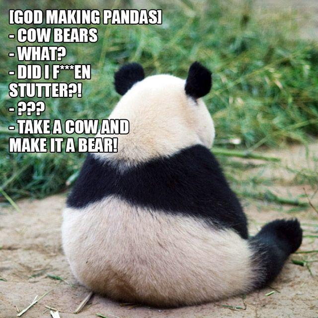Animals Are Proof That God Has A Unique Sense Of Humor (10 pics)