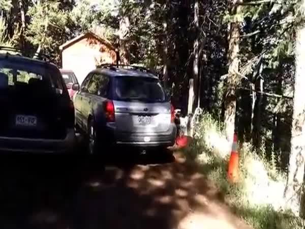 Deputies Free Bear Stuck In Car