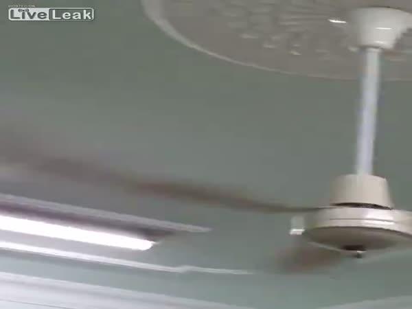 Killing Bats With Ceiling Fan