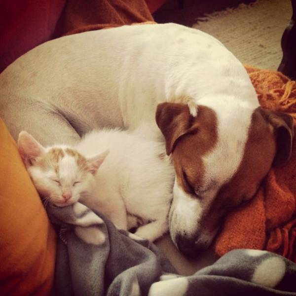 Surprising Animal Brothers Who Come From Different Mothers (53 pics)