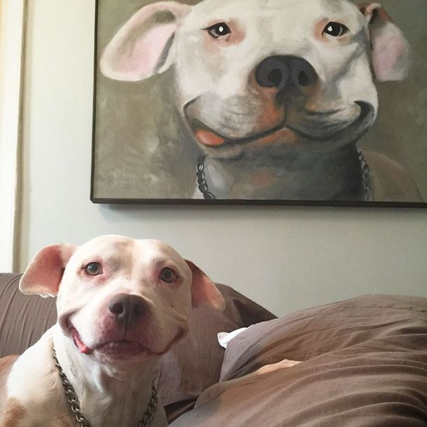 Stray Pit Bull Has A Permanent Smile Now Thanks To A Loving Owner (8 pics)