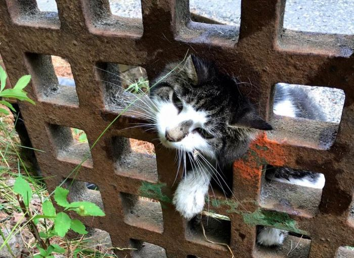 Firefighters Rescue Cat Stuck In A Terrible Spot (6 pics)