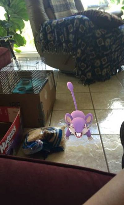 Abandoned Animals Rescued By Pokemon Go Players (5 pics)