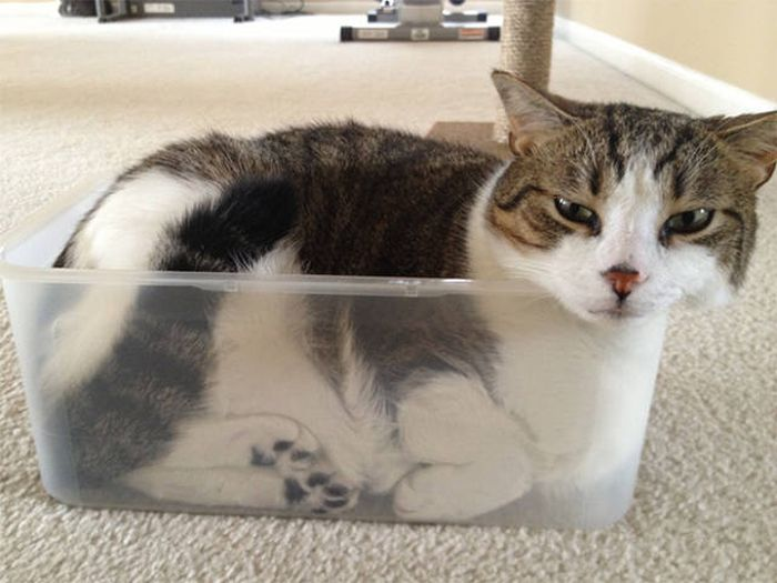 There's Just Something About Boxes That Cats Seem To Love (19 pics)