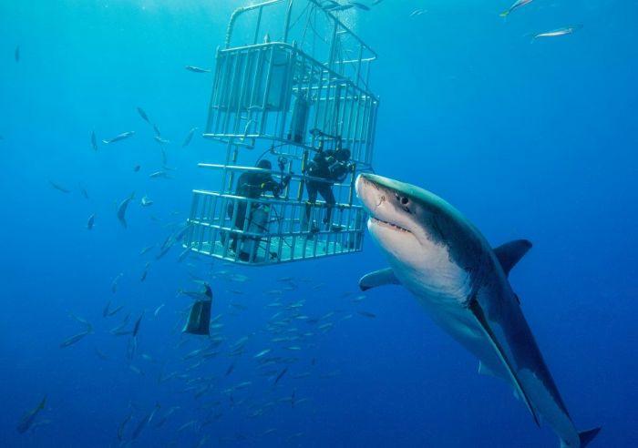 Terrifying Photos Show A Gargantuan Shark Off The Coast Of Mexico (3 pics)