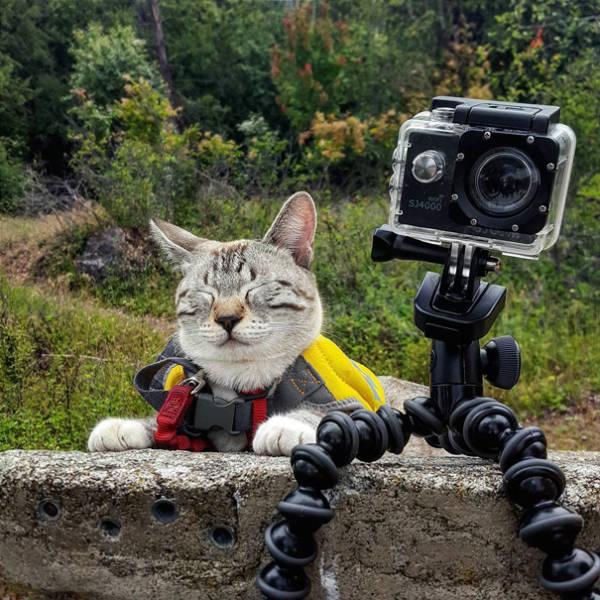 Going Camping With A … Cat? (60 pics)
