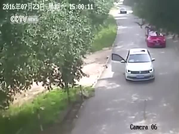 Footage Shows Shocking Tiger Attack In Beijings Wildlife Park