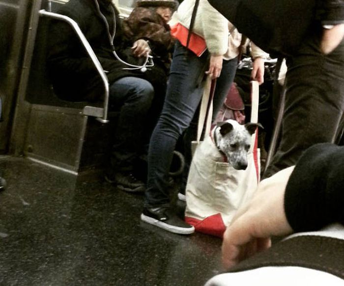 Pet Owners Get Creative With Silly Subway Rules  (21 pics)