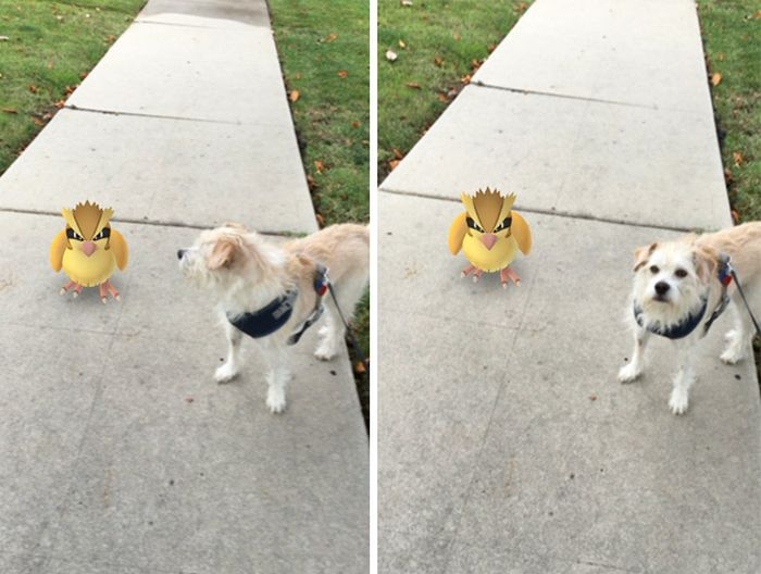People Are Trying To Prove That Their Pets Can See Pokèmon Go (15 pics)