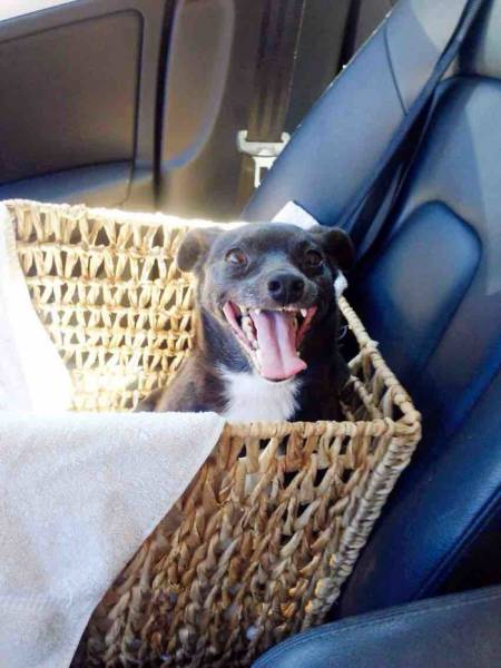 Dogs Make Adorable Faces When They Realize They've Just Been Adopted (35 pics)