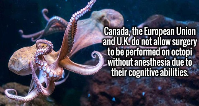 Interesting Facts That Will Impress Your Intellectual Mind (19 pics)