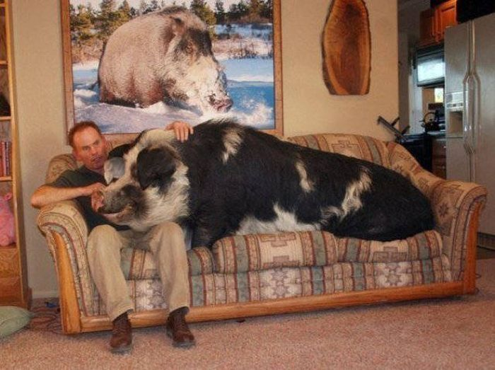 Unusual Pets That Most People Wouldn't Dare To Own (41 pics)