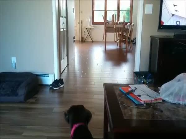 Lazy Dog Plays Fetch