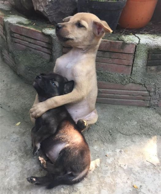 Stray Puppies Won't Stop Hugging Each Other Now That They've Been Rescued (5 pics)