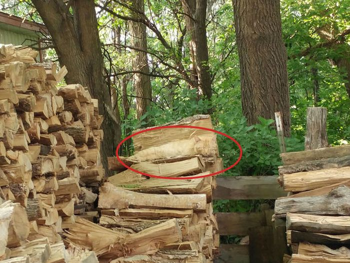 Can Your Eyes Spot The Cat In This Picture? (2 pics)