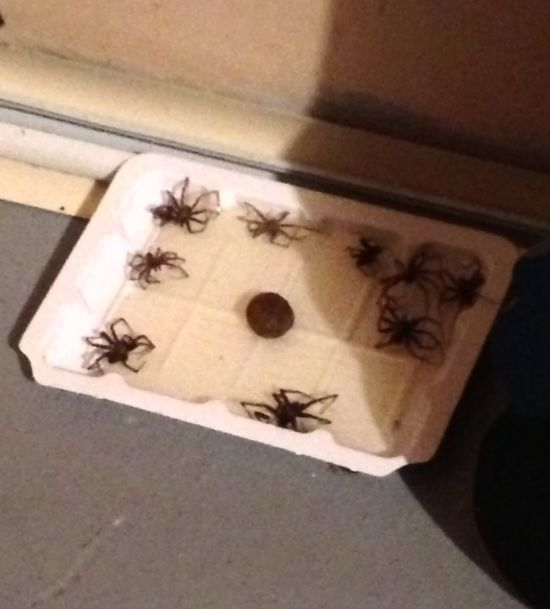 When You Put Down A Sticky Trap You Never Know What's Going To Get Stuck (15 pics)