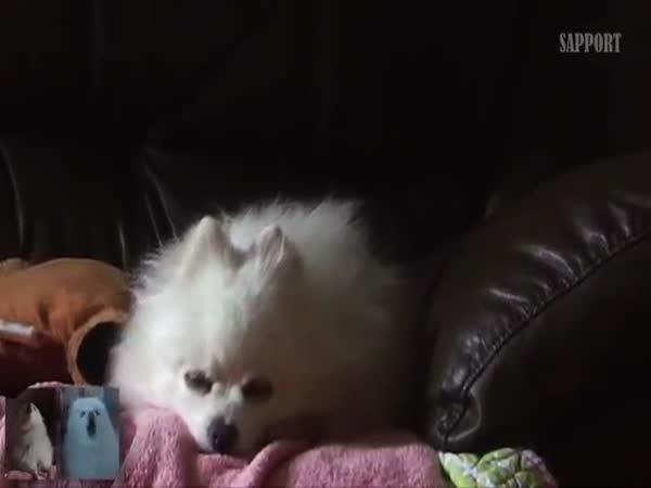 Gabe The Dog Borquiem For A Dog Dream