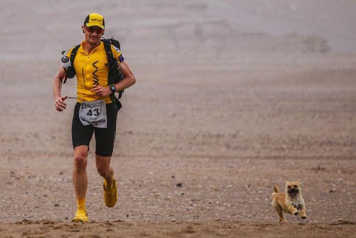 Stray Dog Joins Runner In A Marathon (4 pics)
