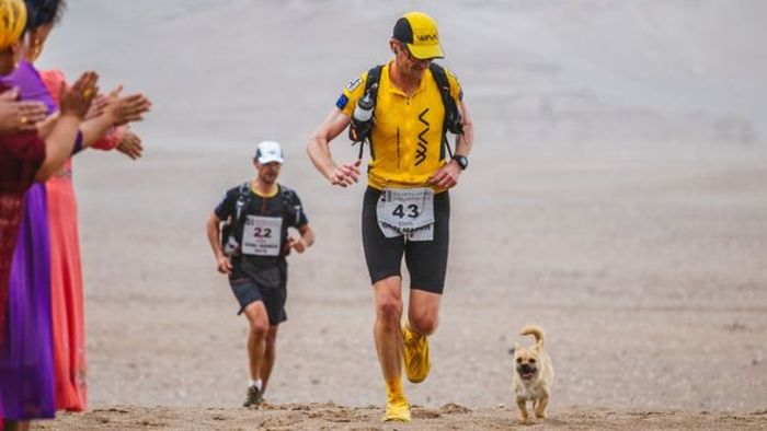 Stray Dog Joins Runner In A Marathon (4 pics)