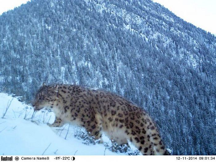 Hidden Camera Captures Animals In Their Natural Habitat (43 pics)