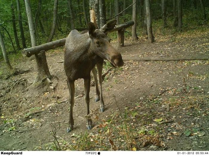 Hidden Camera Captures Animals In Their Natural Habitat (43 pics)