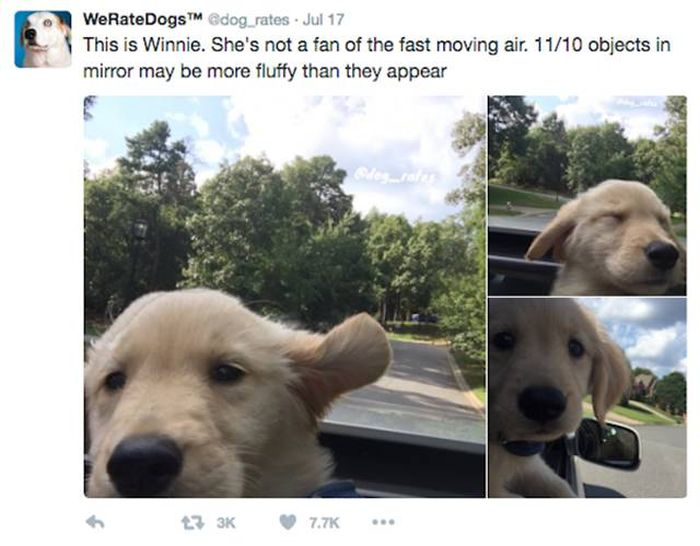We Rate Dogs Is A Twitter Account That Will Keep Dog Lovers Laughing (25 pics)