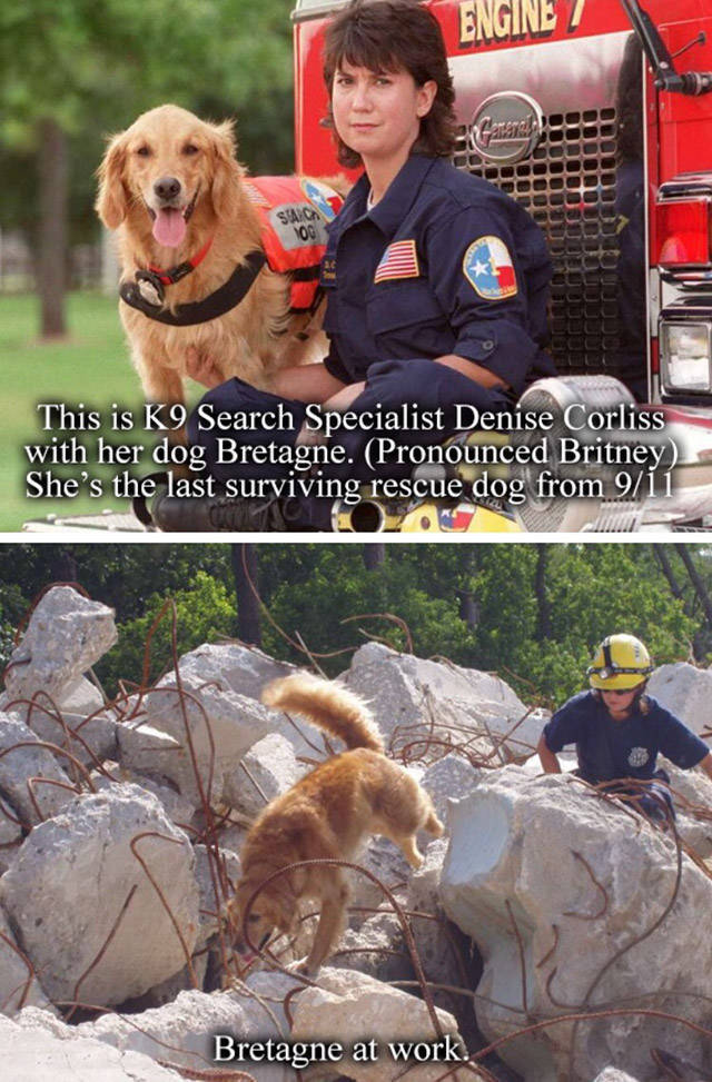 A Tribute To Bretagne, The Last 9/11 Rescue Dog (8 pics)
