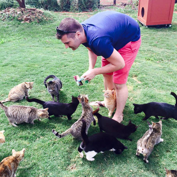 People From All Over The World Come To Hawaii To Visit This Cat Sanctuary (13 pics)