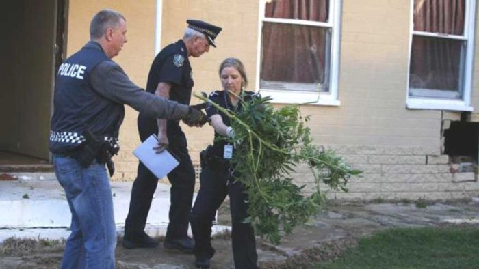Driver Crashes Into House And Finds Unexpected Pot Stash (4 pics)