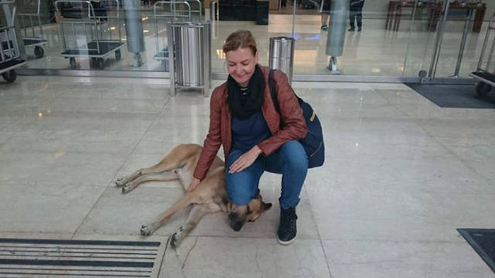 Stray Dog Follows Flight Attendant And Finds A New Home (10 pics)