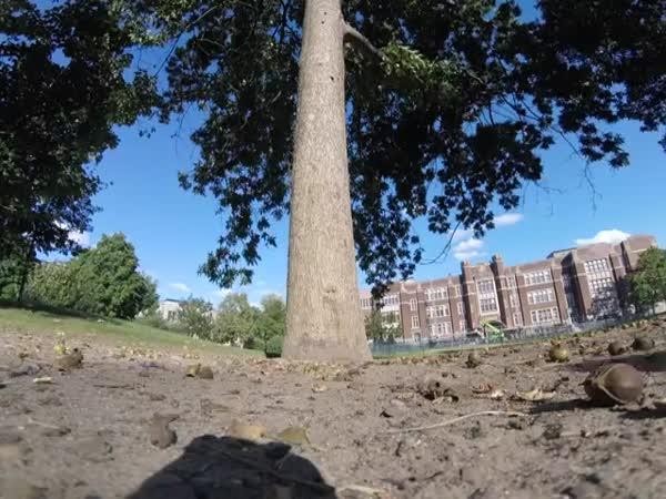Squirrel Take GoPro