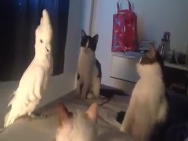 When Parrot Disguise In Cat Group